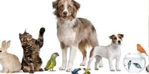 Comprar on-line las mejores ofertas en accesorios para Mascotas