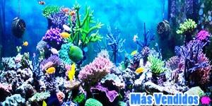 Accesorios para animales acuáticos más vendidos