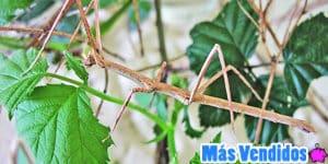 Accesorios para cuidar insectos