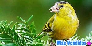 Accesorios y artículos para pájaros más vendidos