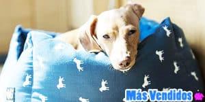 accesorios para perros más vendidos