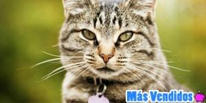 Los mejores collares antipulgas para gatos