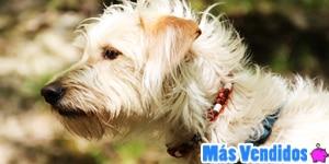 los Collares Antipulgas para Perros Más Vendidos